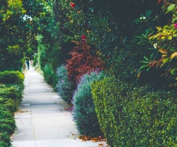 Exterior House Painting Tips: How NOT to Ruin Your Landscaping