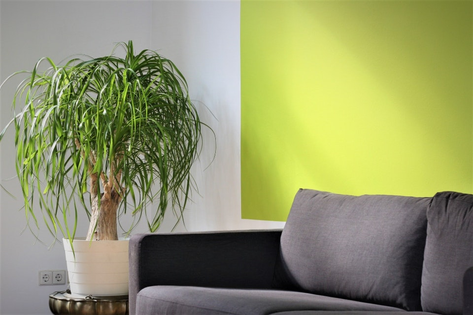 Should I Paint My Walls to Match My Furniture?